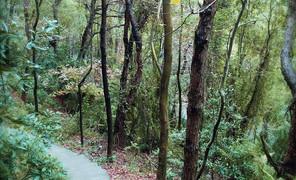 树林里找材料