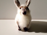 羊毛毡-小胖兔