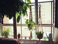 植物挂篮Plant Hanger