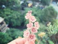 钩针樱花🌸