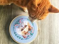 大脸猫大脸猫爱吃鱼<。)#)))≦