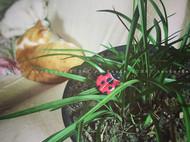 立体刺绣小瓢虫