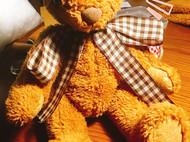 泰迪小熊研究社