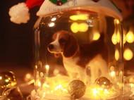 羊毛毡beagle