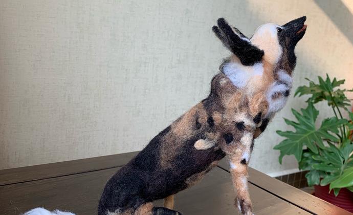BBC最新纪录片王朝中的杂色狼 painted wolf