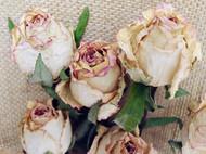 我和我的干花们