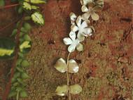 花叶长耳钉