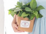 水洗牛皮纸植物花盆/收纳筐