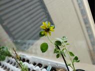 dry flower | 植物与花的墙饰