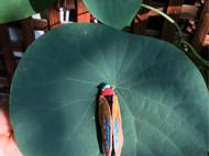 立体刺绣-蝉