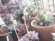 今生种花来世漂亮