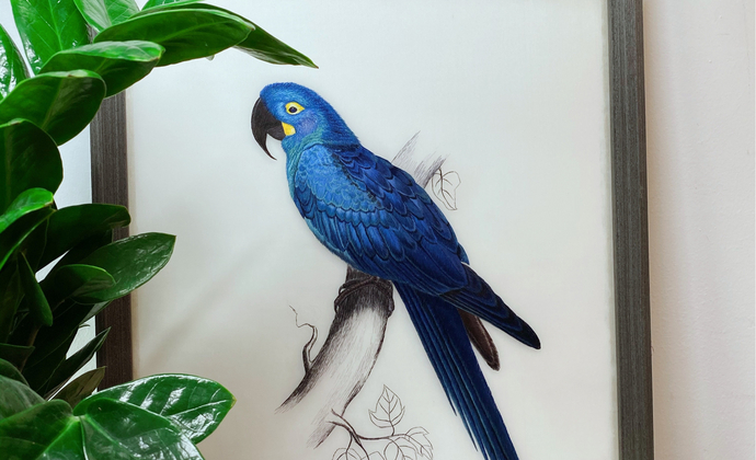 蓝色金刚鹦鹉超写实刺绣仅此一款
