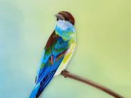 超写实蓝喉蜂鸟蚕丝手工刺绣