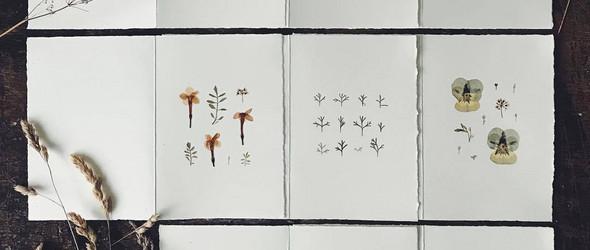 以摄影与押花呈现自然的别样美丽 | MR Studio London