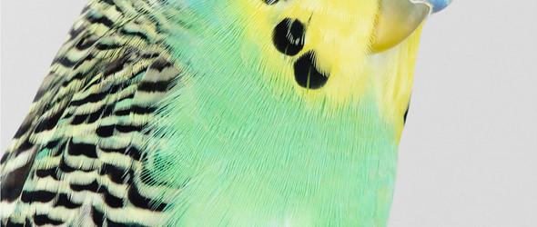 鸟的姿态   澳大利亚摄影师 Leila Jeffreys 的鸟类写真