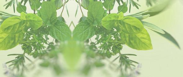 植物中的天然染料