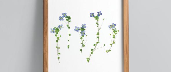 以押花发现和记录瑞士野生植物 | Freshly Pressed