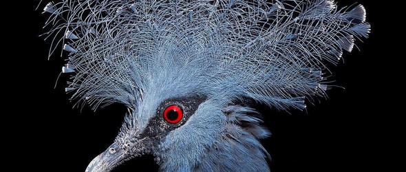 动物们的高光时刻   摄影师Tim Flach 的动物摄影