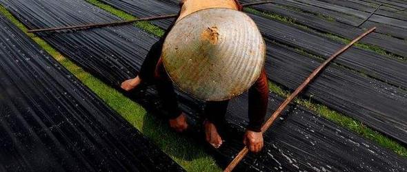 在阳光、草地、水、泥土中轮回的丝绸