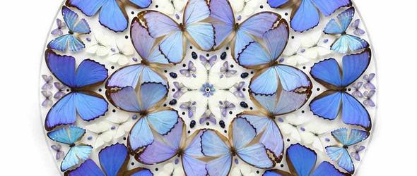 美得超乎想象的昆虫标本 | Christopher Marley