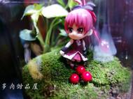 【多肉甜品屋】双面娇娃 RED苔藓小品微景观DIY鲜活青苔顺丰包邮