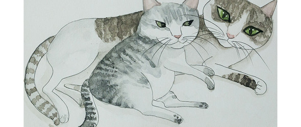 cat story(3)
