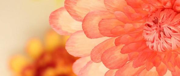 Marisa Tatibana:简单而灿烂的皱纹纸花