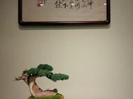 『龙起于野』新中式崖柏盆景,创意摆件,微景观,创意盆景。