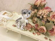 给你们看一只小猫咪 炒鸡可爱 还不会拉屎哦