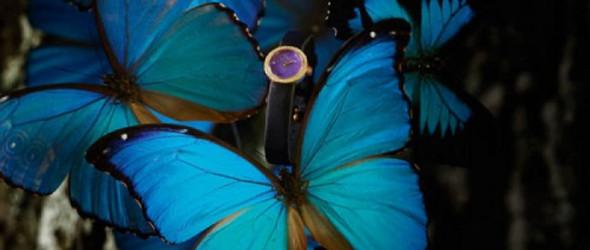 变色蝴蝶翅膀饰品,动物身上的宝石