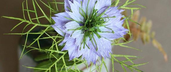 假作真时真亦假 | 美国纸花艺术家 Deanna Toloudis 创作的手工纸艺植物