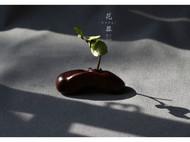 柒言原创-手工可定制-印度小叶紫檀老料-茶席之花罐-手工雕刻