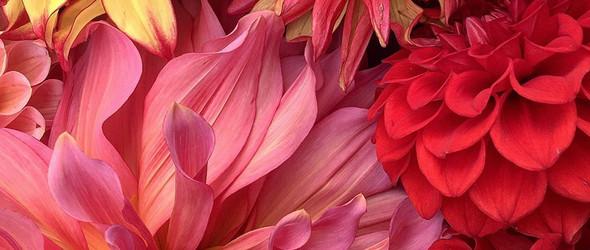 爆炸的色彩:英国摄影师 Sophie Witham 的花卉摄影