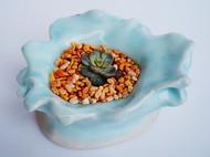 多肉植物和我做的小陶器