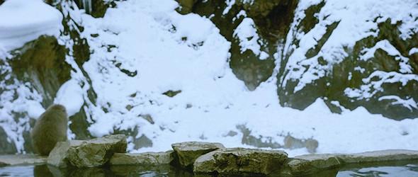 汤田中 丨 看猴子泡温泉更重要之旅