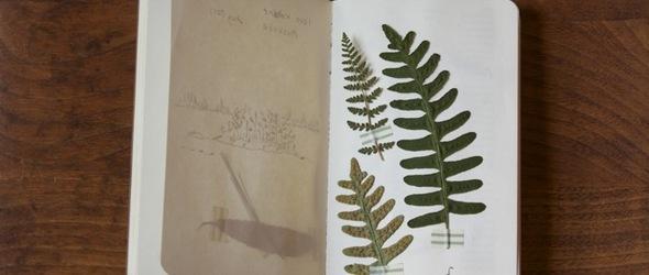 Margaret Oomen - 夏日植物标本