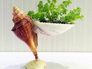 贝壳小花器DIY