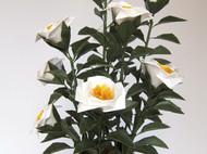 鱼娘娘手工折纸花艺 白茶花