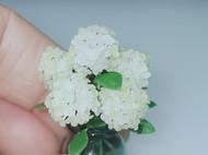12分白色绣球花