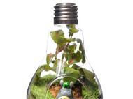 依雯然 知己 苔藓微景观 生态瓶