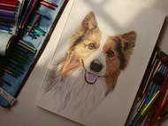 """""""可可""""(pencil Drawing)#Pet Portrait#"""