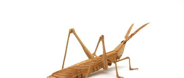 昆虫竹细工 Bamboo Insects  | 日本艺术家 斋藤徳幸 的生动而传神的竹子昆虫雕塑