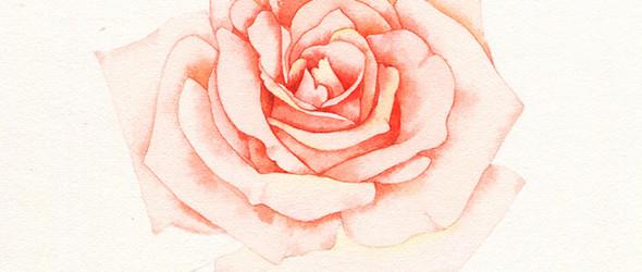 粉色水彩玫瑰花手绘教程 | 那仁