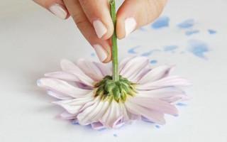 艺术创想 - 有趣的花卉艺术(Flower Art),使用花朵创作独特的绘画DIY教程