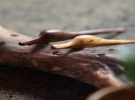 纯手工制作的木质挖耳勺