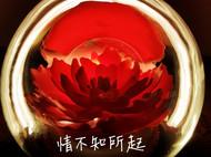 #创意翻糖礼品# 情不知所起,一往而深——牡丹亭