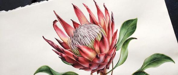 @y_yumaeva:色彩浓郁的手绘花朵