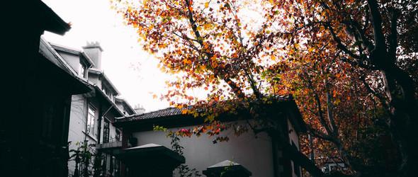 深秋的上海街头 | 街拍