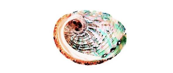 从古法螺钿到时尚首饰,鲍鱼壳的华丽变身