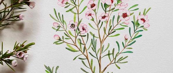 @minartillust - 手绘植物与花卉